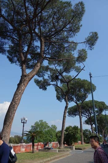 Napoli サンタルチア並木.jpg